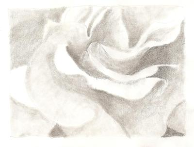 Pencil Drawing of a Rose Bloom
